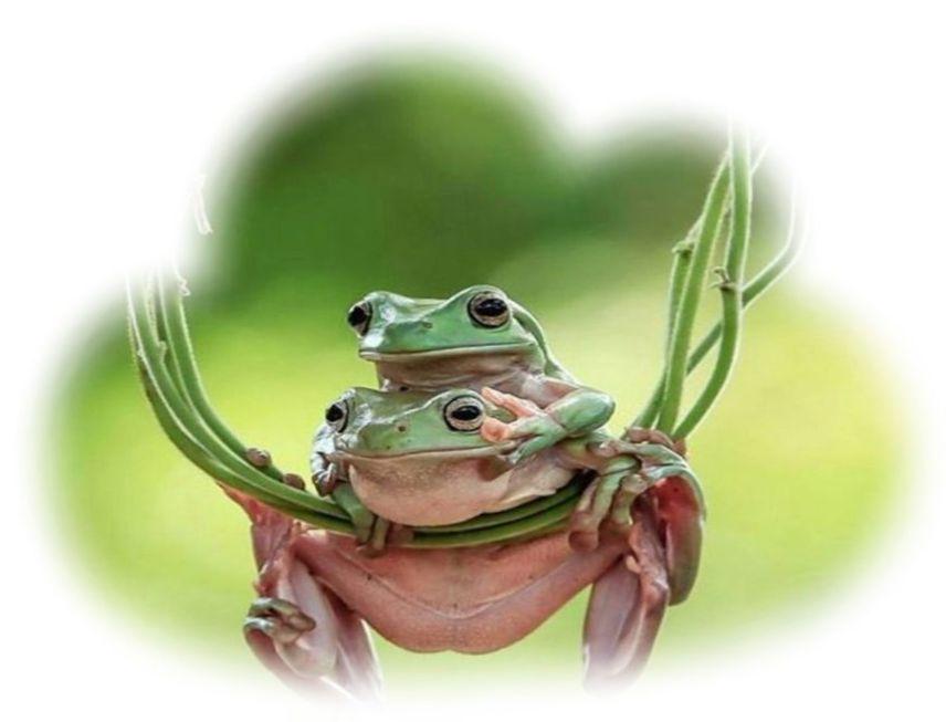 Кому приснилась жаба во сне